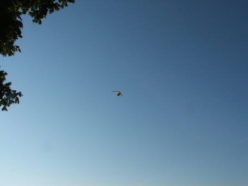 flying boat 7