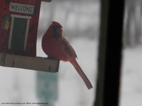 A1 Cardinal Bcr